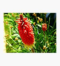 Fiery Flower Photographic Print