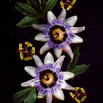 Pazziflora Botanikal by MOREbyJP