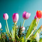 Tulips 4 by JohnW
