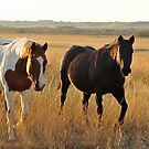 What a Nice Couple! by Donna Ridgway