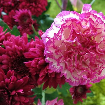 Dreamy Pink Carnation and Deep Red Dahlias by kathrynsgallery