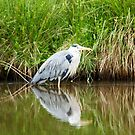 Heron at rest by Andy Beattie