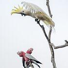 Get Off My Perch by Werner Padarin