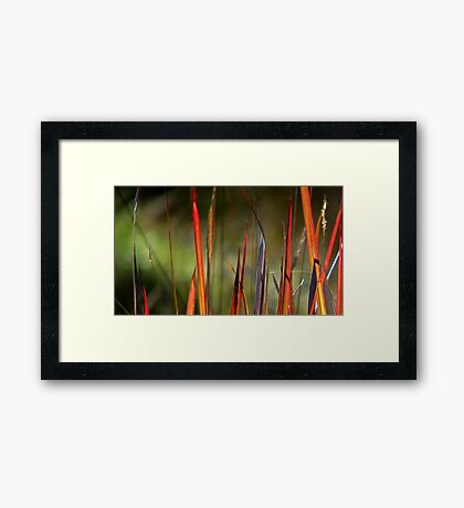 Tread Carefully Framed Print
