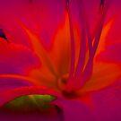 Tiger lilie Bright Eyes   by Linda Miller Gesualdo