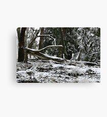 NSW Tablelands Canvas Print