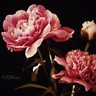 Belle En Rose (Pretty In Pink) by CJ Anderson