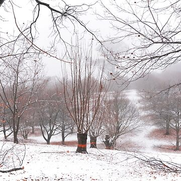 Snow over the chestnut trees by retepk