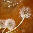 Break Adrift by IndigoMidnight