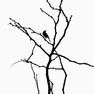 birdy by Stuarty