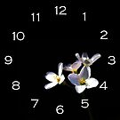 Cardamine Pratensis Flowers White Numbers Wall Clock by Alan Harman
