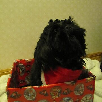 shih tzu Christmas time by PVagberg