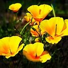 yellow wild flowers by therightprofile
