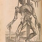 Anatomical skeleton Illustration from De humani corporis fabrica libri septem by Andreas Vesalius published circa 1543 by artfromthepast