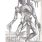 Anatomical skeleton Illustration from De humani corporis fabrica libri septem by Andreas Vesalius published circa 1543 (cleaned to remove bleed thru text) by artfromthepast