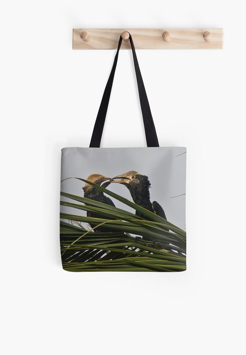 Silvery-cheeked hornbills by David Clarke