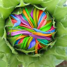 Rainbow Sunflower by Leslie  Lippert