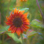 Sensuous Sunflower by Viv Thompson