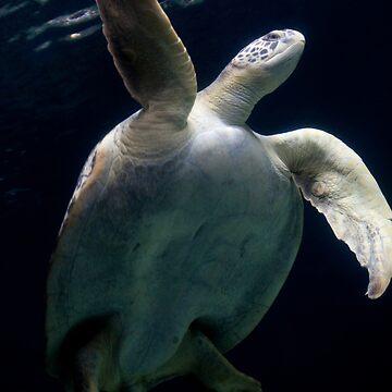 Sea turtle by JonathanEpp