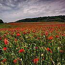 Boxley Poppy Fields by Dave Godden