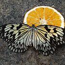 Butterfly 5 by WhiteDiamond