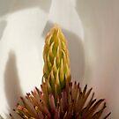 Magnolia by KitPhoto