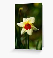 Backlit Narcissus Greeting Card