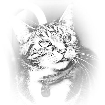 Arty Cat by teapotore