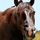 Howdy Partner! by Jess Fleming