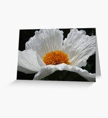 Matillija Poppy Greeting Card