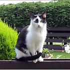 The Fence Sitter - Cat and Rose by BlueMoonRose