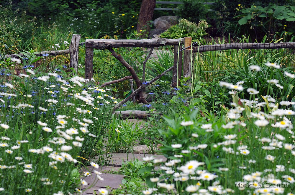 Stepping Stones Through the Garden   by Monica M. Scanlan