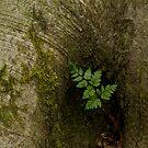 Little Fern by KitPhoto
