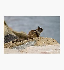 California Ground Squirrel Photographic Print