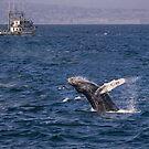 Durchbrechen des Buckelwals von Celeste Mookherjee