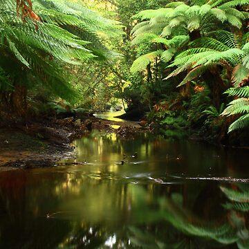 Salmon River , far nor west Tasmania , Australia by phillip24