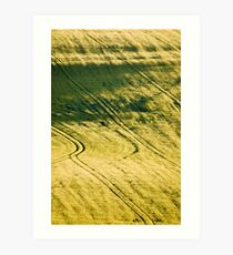 Evening barley Art Print