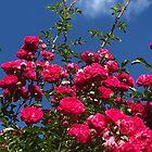 Monet's Garden - Rose Sky by KazM