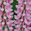 Pink Lupines by Tracy Wazny
