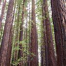 Walk Tall as Trees by Linda Lees