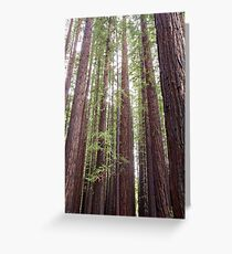 Walk Tall as Trees Greeting Card
