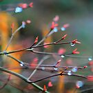 Colors of Spring by Faye White