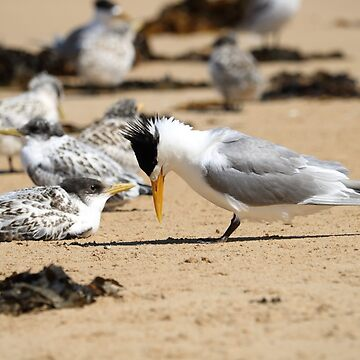 Two Terns on the Beach by kalaryder