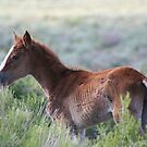 The Legend Of Spring: Orphan Mustang by Arla Ruggles