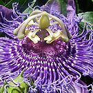 Passion Fruit by jackitec