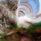 Shells by SexyEyes69