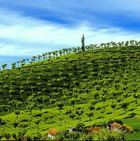 How Green Was My Valley by Mukesh Srivastava