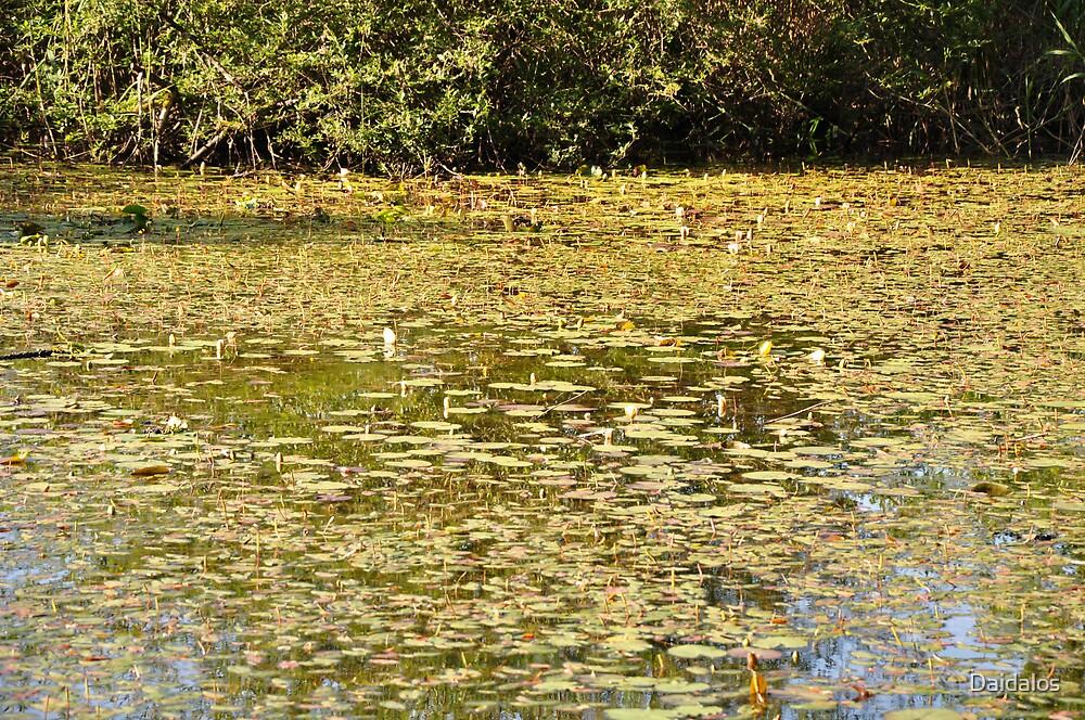 Beautiful Pond by Daidalos