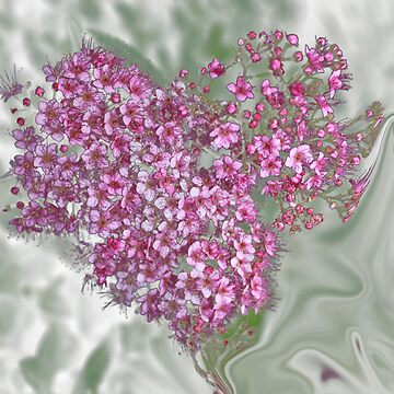Heart of blossoms II by BlueDragonfly