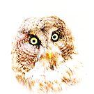 Owl by Mats Silvan